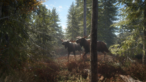 4295-thehunter-call-of-the-wild-20